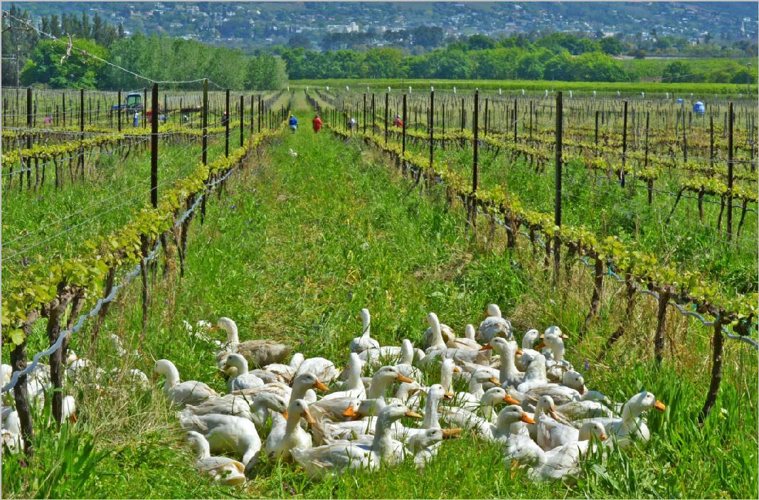 4th october 2012 main ingredient 39 s menu nederburg for Grand jardin wine