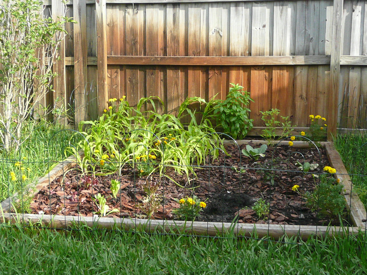 Gardening south florida style september 2011 - South florida vegetable gardening ...