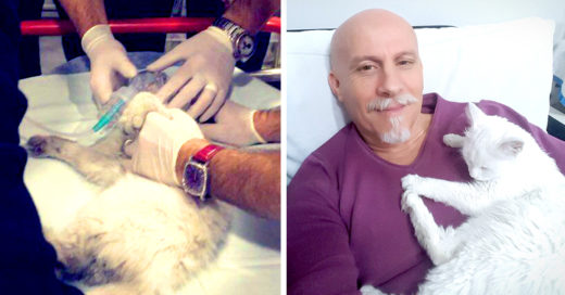 Este paramédico le salvó la vida a un gatito practicando RCP