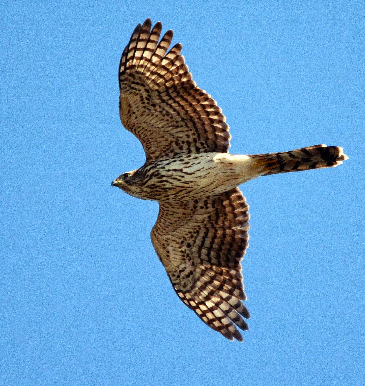 Newbie Birding Adventures   1511 x 1600 jpeg 673kB