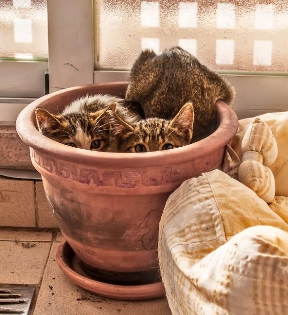 Sitios raros donde puedes encontrar a tu gato