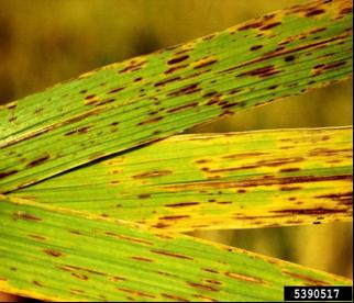 cum se poate elimina papilomul în zona intimă