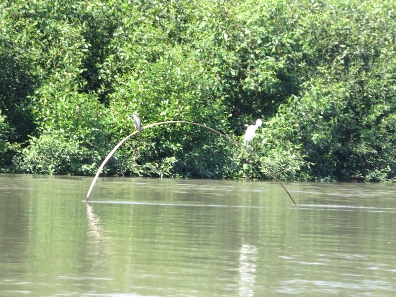 Pulau Sarinah, Pulau Hasil Endapan Lumpur Sidoarjo