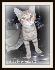 9/2/11 Babies at Death's Door. Shelter Has No PUBLIC ADOPTIONS or PETFINDER SITE
