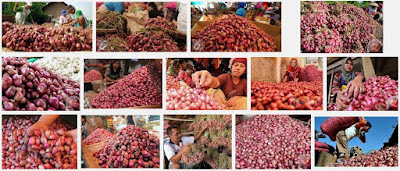 harga bawang brebes ,harga bawang probolinggo,harga bawang nganjuk,harga bawang enrekang,harga bawang padang,harga bawang pamekasan