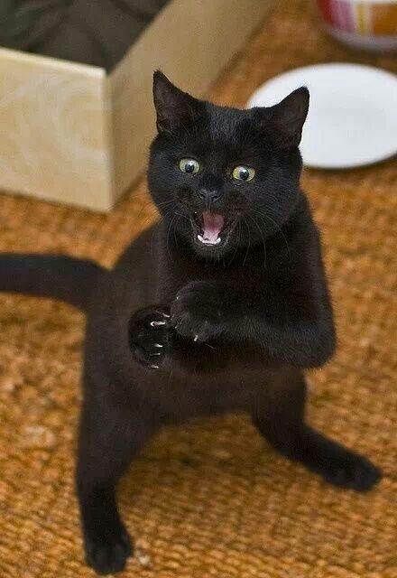 marti 13 black cat ghinion noroc