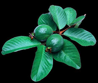 Guava Wellness Benefits Together With  Nutrition