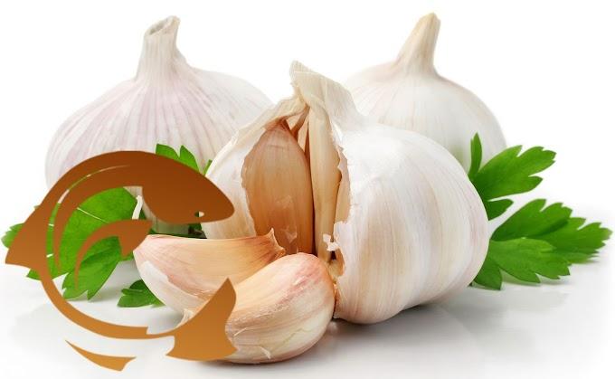 Essen Aroma Garlic
