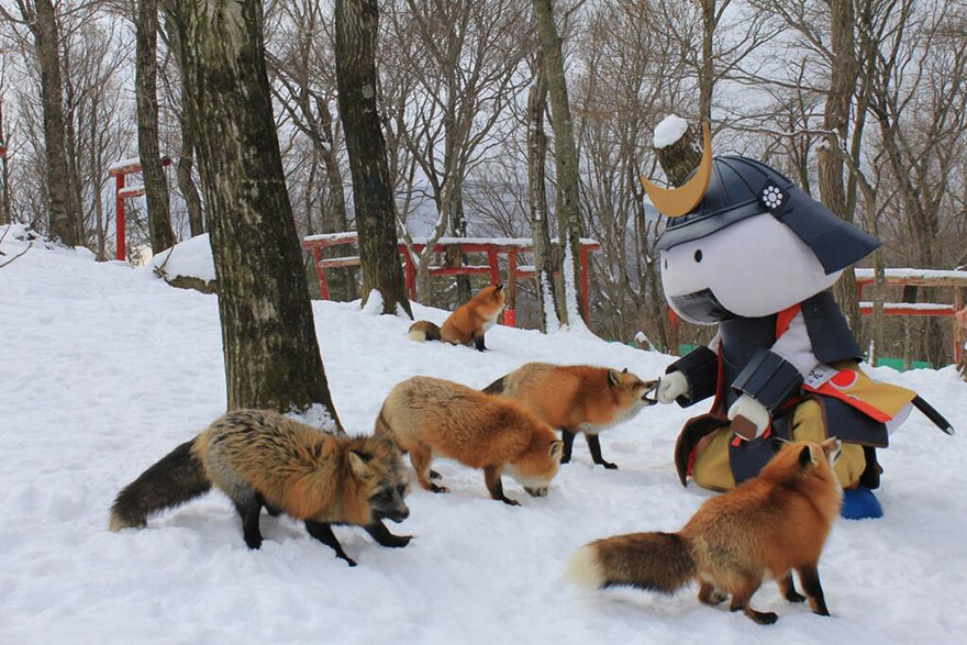 zao-fox-village-japan-4