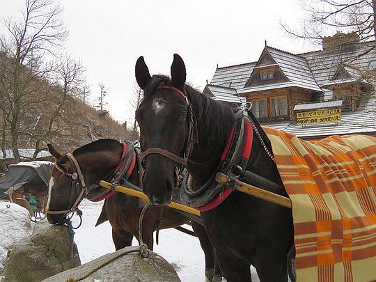 Konie w Kirach.