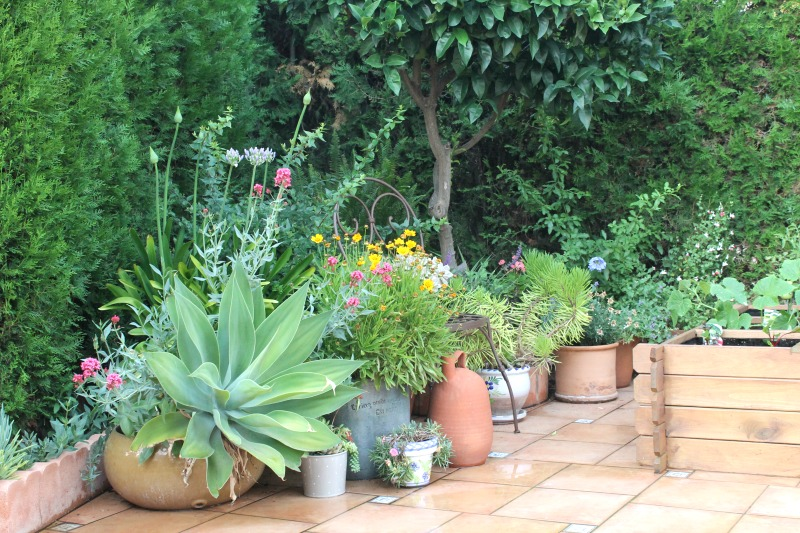 Avage attenuata, agapantos, centranthus ruber, coreopsis, plumbago