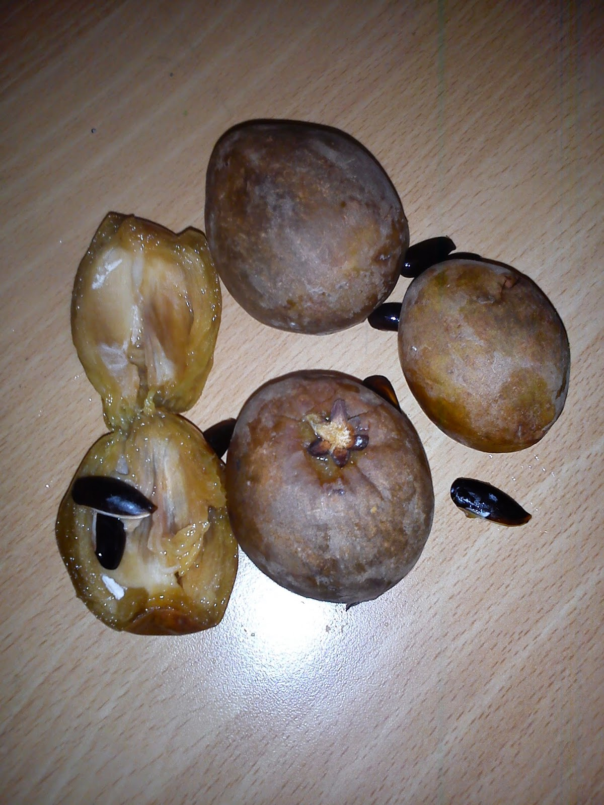 Herbs From Distant Lands Manilkara Zapota Sapodilla