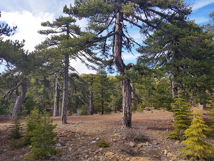 Forêt sur le mont