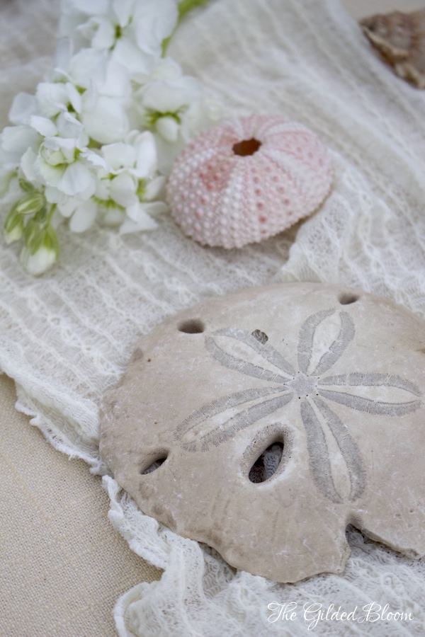 Sand Dollar and Anemone Shells- www.gildedbloom.com