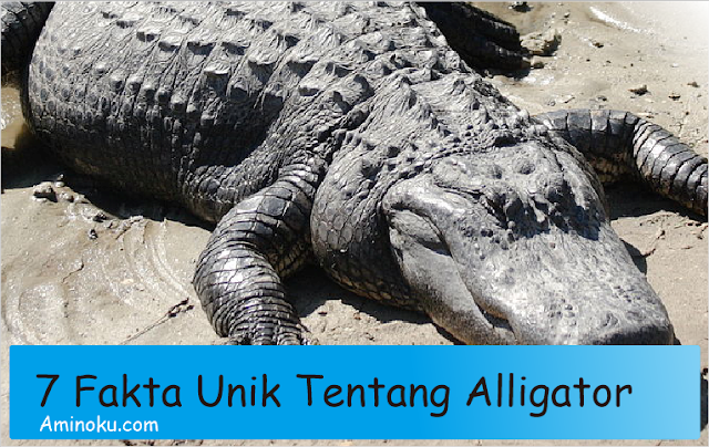 Fakta unik alligator