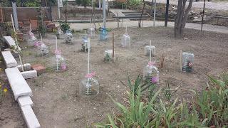 Bottled Garden, Autumn, Yambol, Eco Friendly,