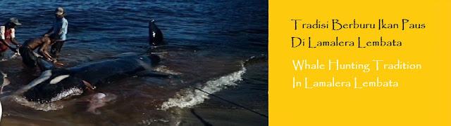 https://ketutrudi.blogspot.com/2018/10/tradisi-berburu-ikan-paus-di-lamalera.html