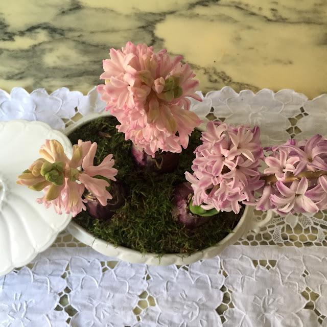 hyacinthus shabby chic