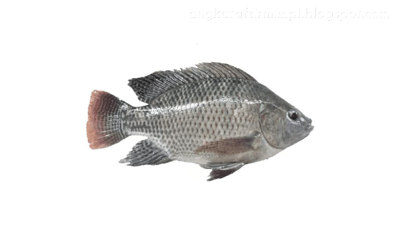 Mimpi mancing ikan mujair di sungai togel
