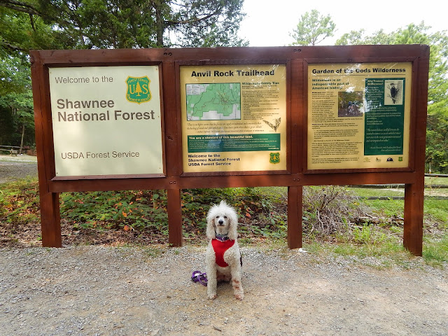 #CarmaPoodale, #Poodle sitting in front of Garden of the Gods sign