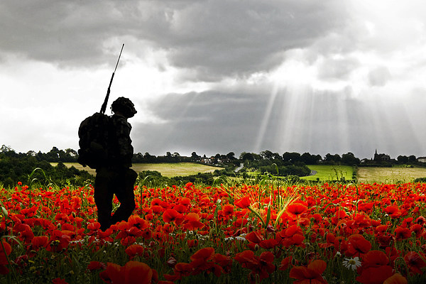 Image result for WWi poppies