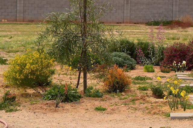 desert garden, small sunny garden, amy myers