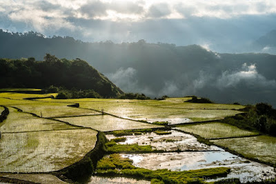 Rizieres-Buscalan-Kalinga-Philippines-Ricefields