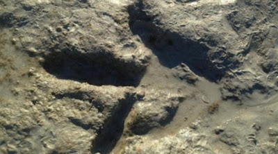 Dinosaurus:Jejak Kaki Dinosaurus di Pantai Australia