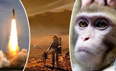 macaco encontrado em marte