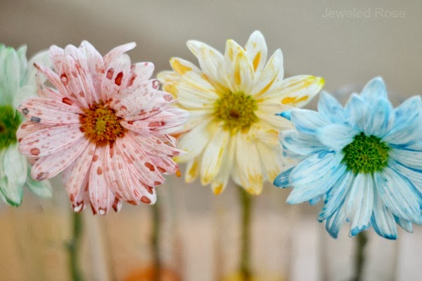 Flower Experiment for Kids- a fun & magical way for kids to learn about flowers