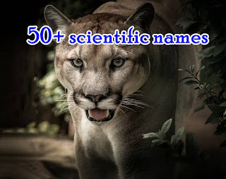 50+ scientific names of animals and plants