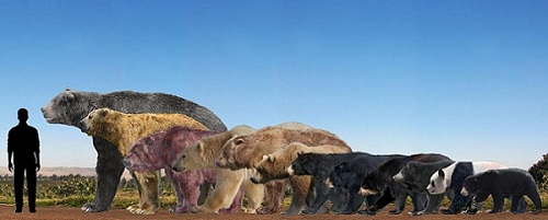 Tabla comparativa tamaño especies de osos en la historia