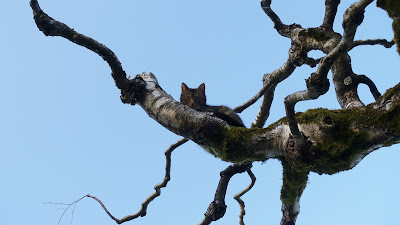 Katze auf dem Baum