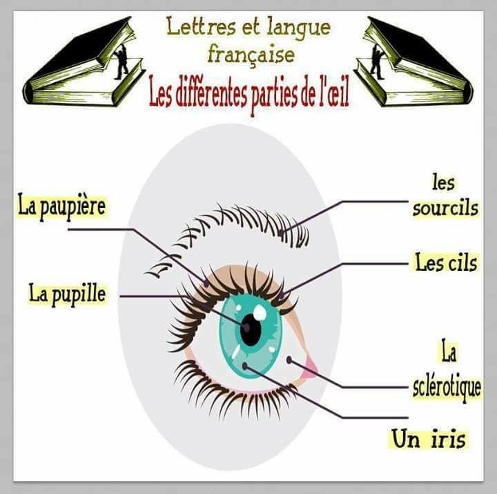 Les différentes parties de l'œil - Vocabulaire