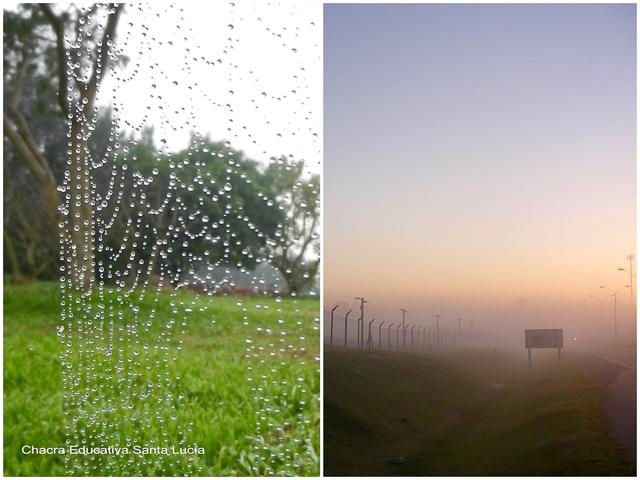 Rocío en una tela de araña y neblina matinal - Chacra Educativa Santa Lucía