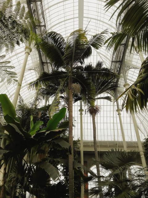 palmeras en jardin botanico de edimburgo