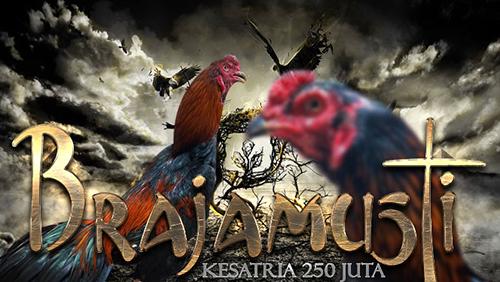 6 Daftar Ayam Aduan Paling Mahal Se Indonesia