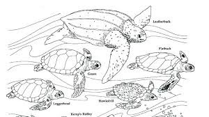 Turtle coloring pages for parking