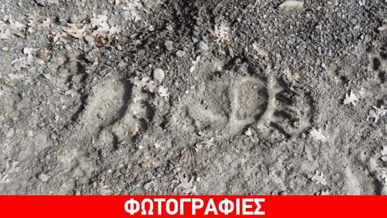 Καστοριά: Χειμερία νάρκη τέλος για τις αρκούδες