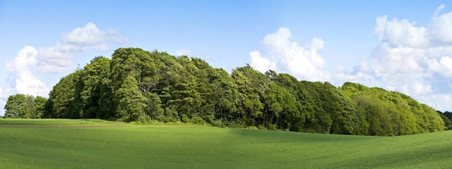 Geniş bir yeşillik alandaki sık ağaçlardan oluşan koruluk alan