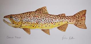 Brown Trout, Pat Kellner, P. H. Kellner, Fishing Art, Fly Fishing Art, Texas Freshwater Fly Fishing, TFFF, Fly Fishing Texas, Texas Fly Fishing