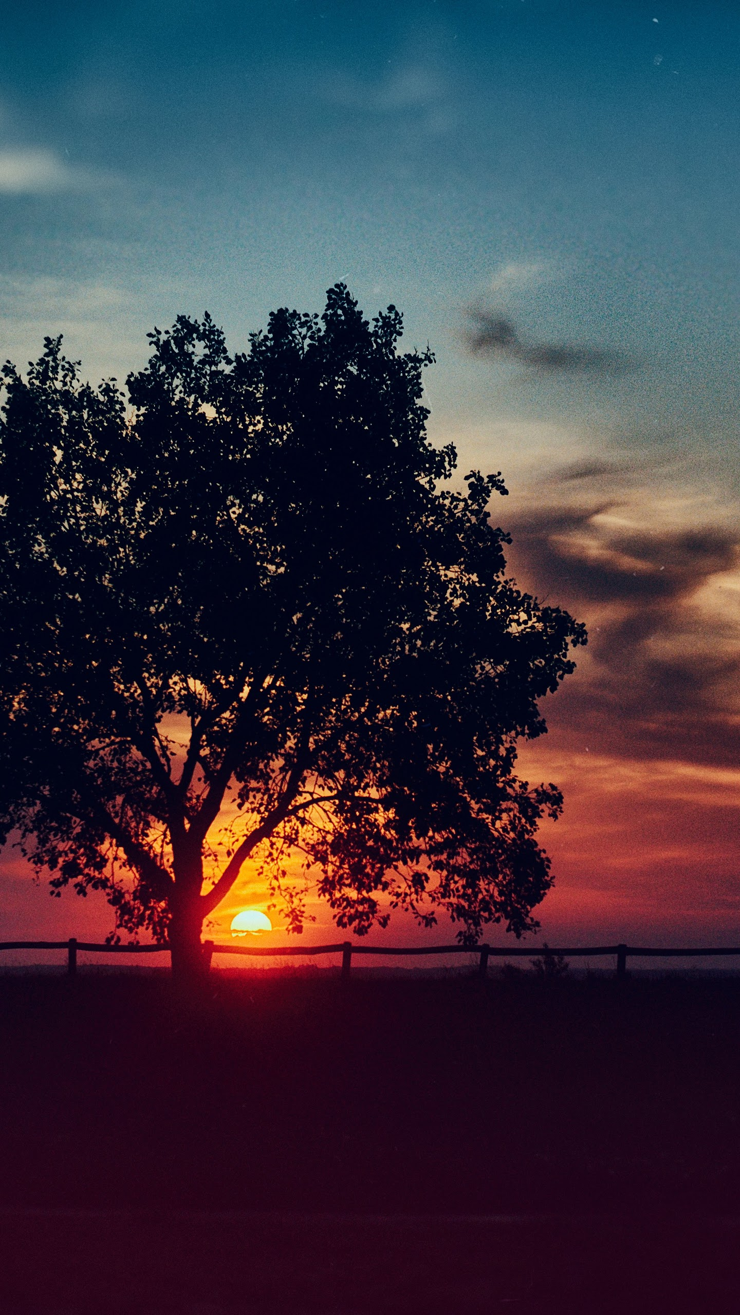 Sunset Scenery Tree Landscape Nature 8k Wallpaper 101