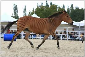 Cerita Fabel Kuda Berkulit Harimau