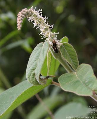 flora nativa tinajera
