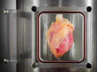 Humans now, could create a Heart in the Lab, Argue with God?