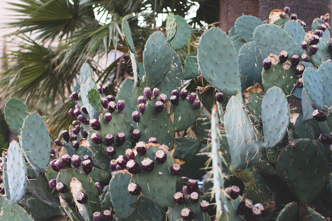 cactus, new mexico