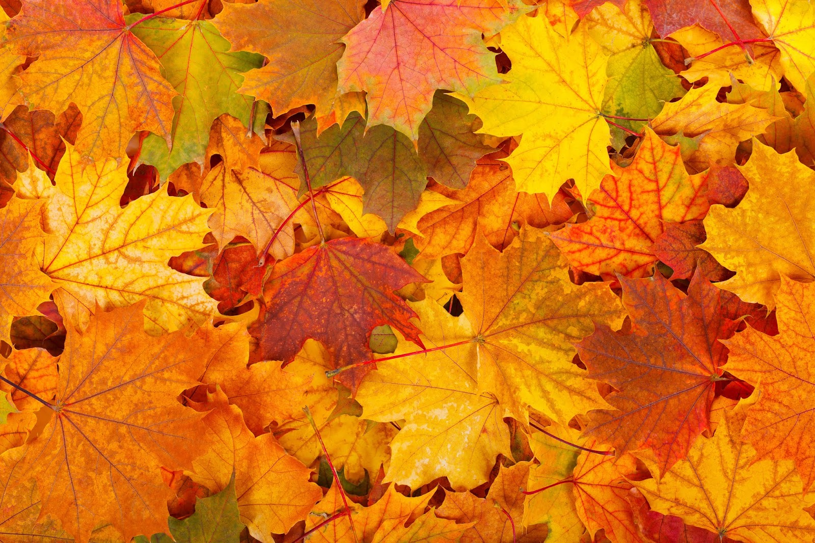 Осенние листья для дружной компании