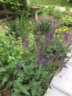 summer_garden_flowers