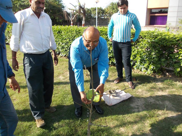 CSR activities tree plantation