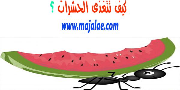 كيف تتغذى الحشرات